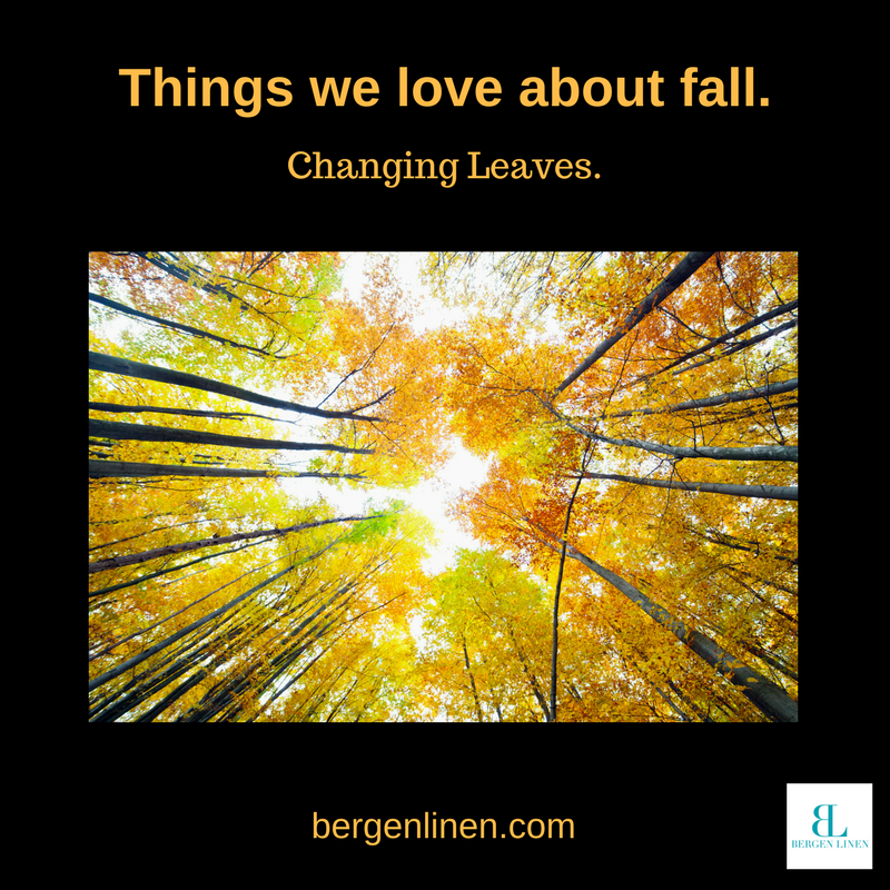 autumn, fall, fall leaves